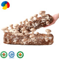 ISO22000 certificated hard sawdust shiitake mushroom substrate