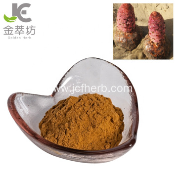 cynomorium extract powder/cynomorium songaricum extract