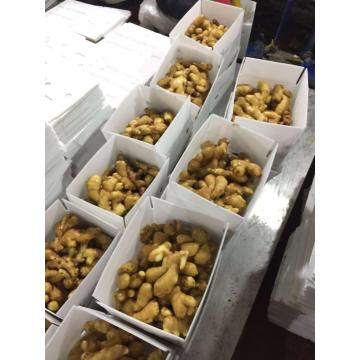2020NEW CROP  CHINESE GINGER