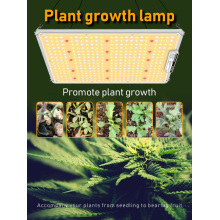 Best 2.4G CCT Grow Light for Indoor Plants