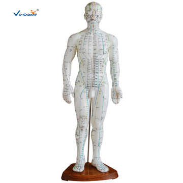 50CM PVC Male Acupuncture Model