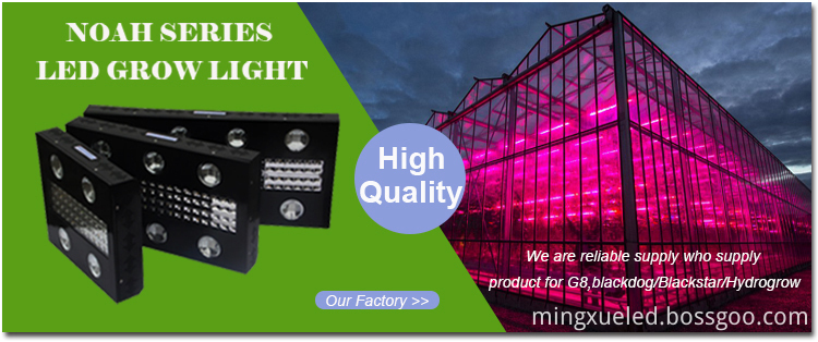 NOAH 4 LED GROW LIGHT