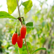 Ningxia Good Goji berry