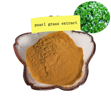 factory supply natural pearl grass extract powder/phyllanthus urinaria extract/chanca piedra extract