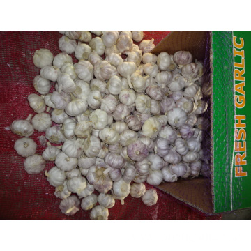 Normal White Garlic Packed In Carton