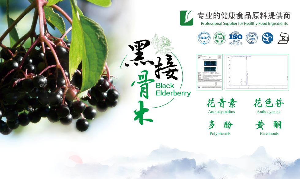 Elderberry Extract Cphi