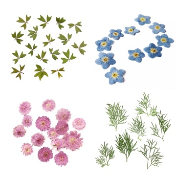 10pcs Pressed Real Dried Flower Vivid Dry Leaves for DIY Crafts Bookmark Card Making Phone Case Embellishment Supplies