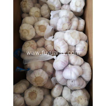 NORMAL white garlic 2019 jinxiang