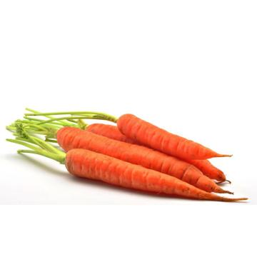 2020 Hot Sale Carrot