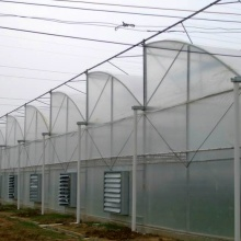 Agriculture Multi Span Film Greenhouse