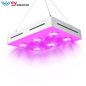 600 watt grow light for succulents