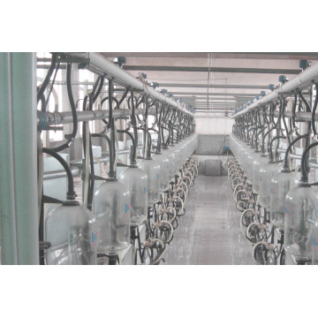 High effiency fish bone milking hall