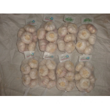 Normal white garlic packed in 500g bag