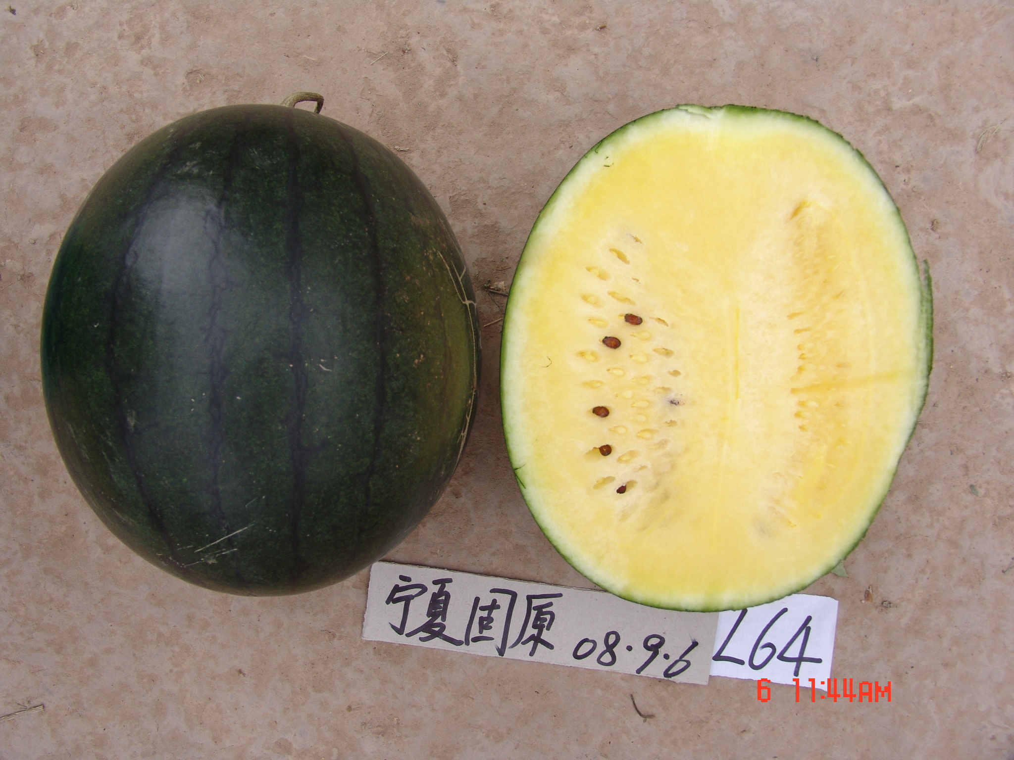 Yellow Flash Watermelon Seeds for Sale