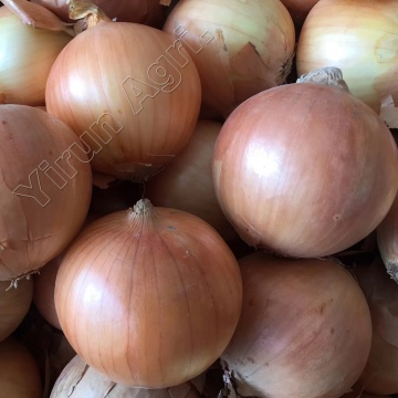 Organic Onions for Wholesale