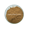 Melissa Officinalis Extract Powder Polyphenols 20%