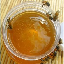 Wholsale sweet bee honey low price