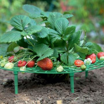 5PCS Plant Plastic Tool Strawberry Growing Circle Support Removable Easy Install Agriculture Improve Harvest soporte fresas #15