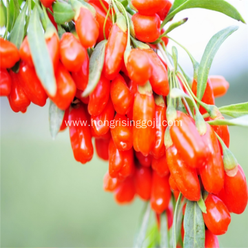 Goji Berry Juice Concentrate Fresh Goji Berries