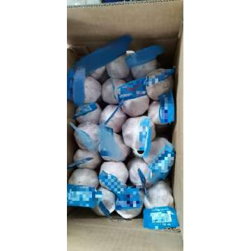 GARLIC AJO MESH BAG CARTON GOODQUALITY  PRICE