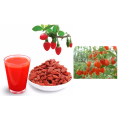 Pure Authentic Dried Goji Berry