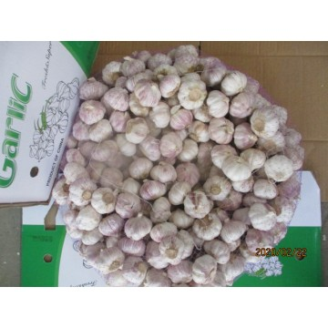 Hot Sale 2019 Garlic
