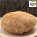 Organic Dried Lion's Mane Bearded Tooth Mushrooms Hericium Erinaceus Fungus New