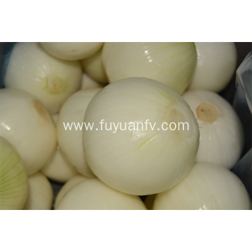 Hotsale Yellow Peeled Onion with good quality
