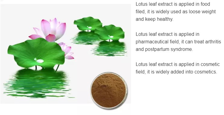 Lotus Leaf Extract 4