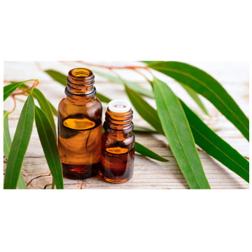 Essential Oils Eucalyptus Fragrance Oil for Candles,Massage