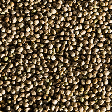 Hemp Seeds Reduce the Risk of Heart Disease