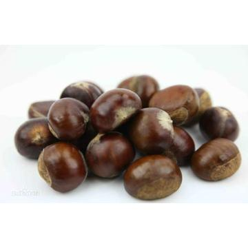 Good Quality New Crop Chestnut