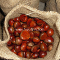 Harvest fresh chestnut from Dandong with good price