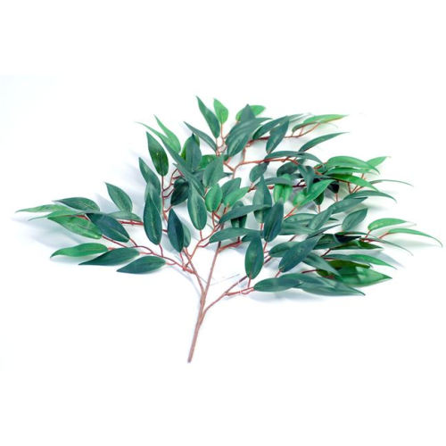 Eucalyptus Essential Oil 50ml