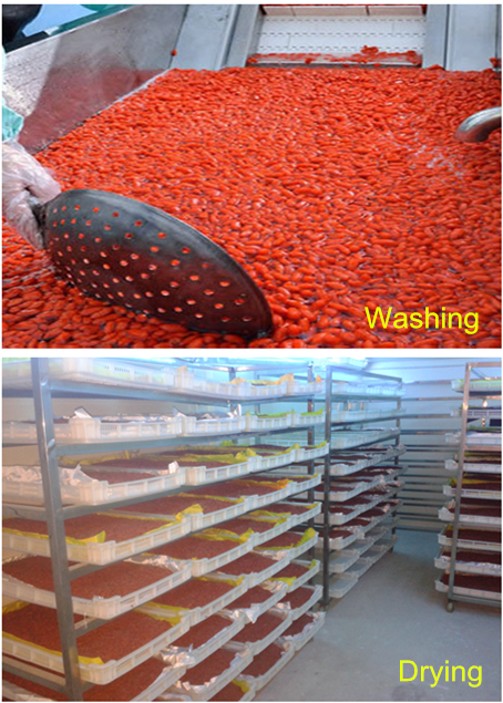 Goji berry washing & Drying