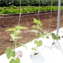 2x500m uv treated cucumber climbing net