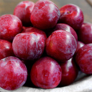 Fresh New Crop Sweety Plum