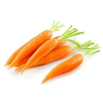 High Quality 2020 New Crop Fresh Carrot