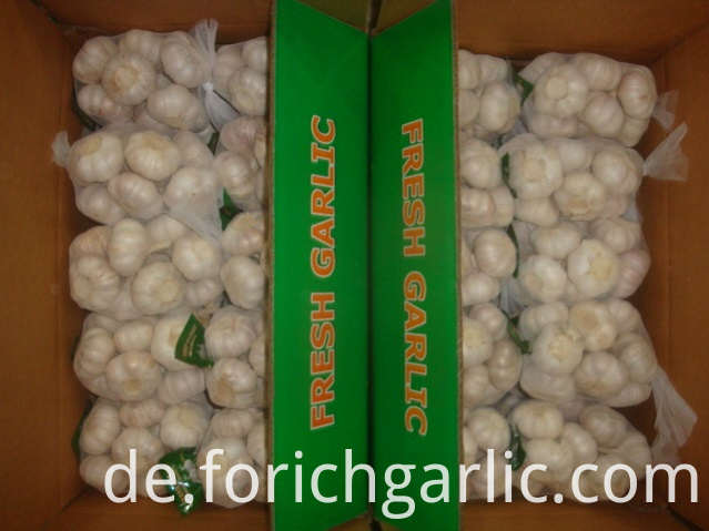 500g Normal White Garlic