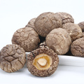 High Grade Organic Dried Mushroom