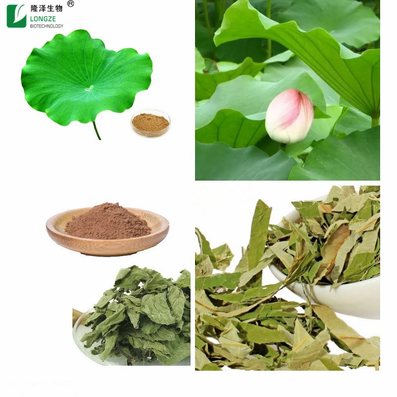 Lotus Leaf Extract 5