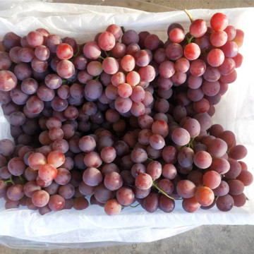 top quality 2020 crop  fresh grape