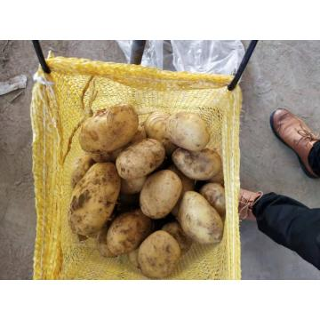 SELECTED QUALITY NEW CROP FRESH POTATO