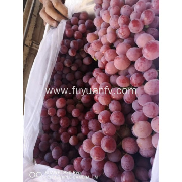 2019 YUNNAN GRAPES START
