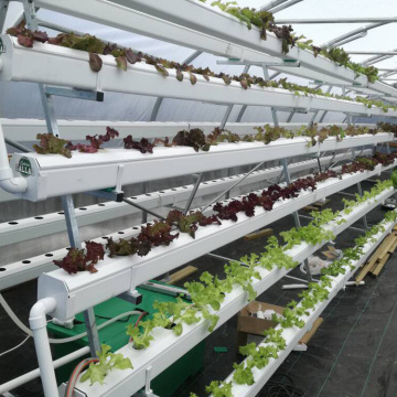 Greenhouse Vertical hydroponic growing systems for lettuce