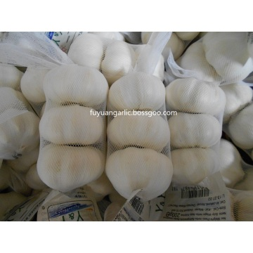 New pure white garlic is in hot sale