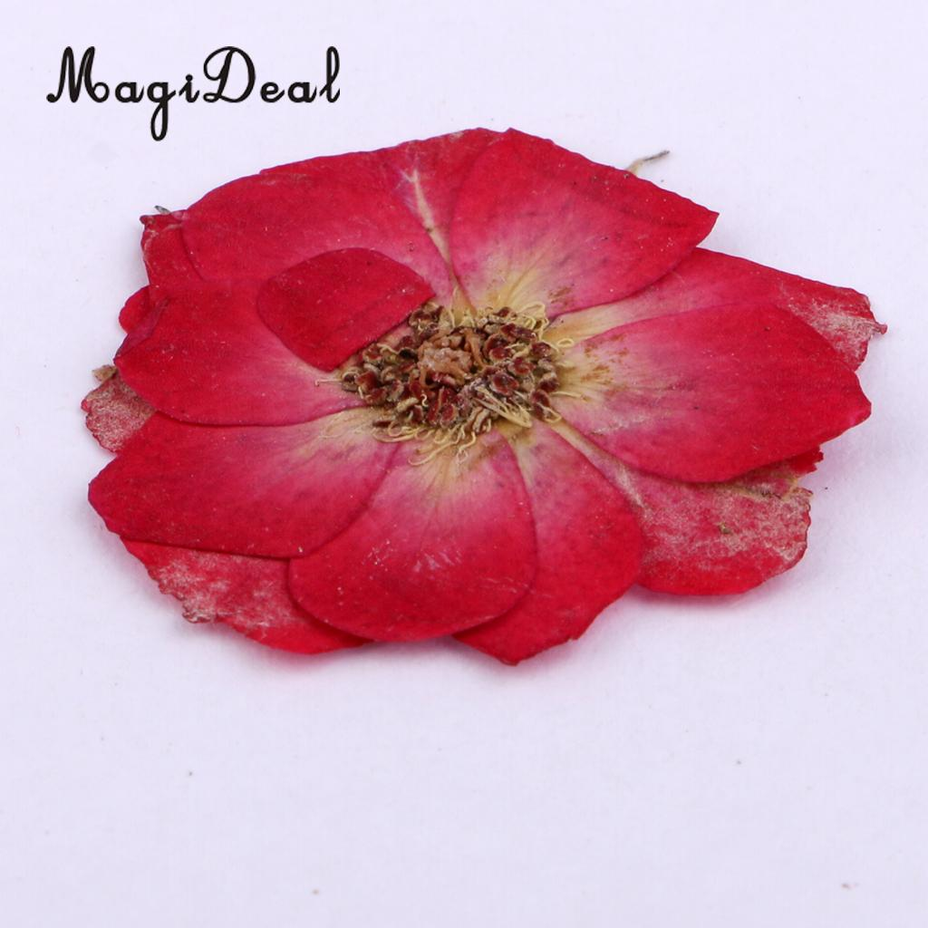 10 Pcs Dried Pressed Flowers for DIY Scrapbooking Crafts Red Rose Decorate Cards Dried Flower House Decoration