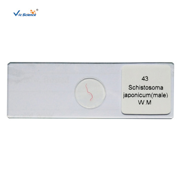 Medical Parasitology Slides Set Of 10 Pcs