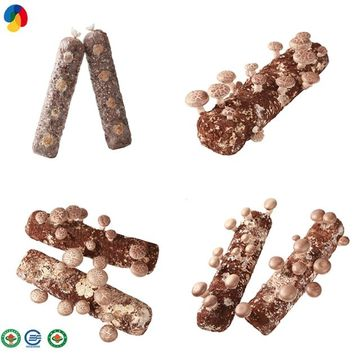 High yield hard wood shiitake logs for exporting