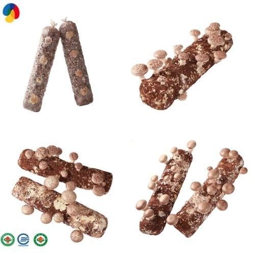 Chinese top quality shiitake mushroom spawn/log